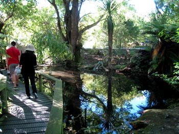 ニュージーランドの原生林を歩いているかのよう